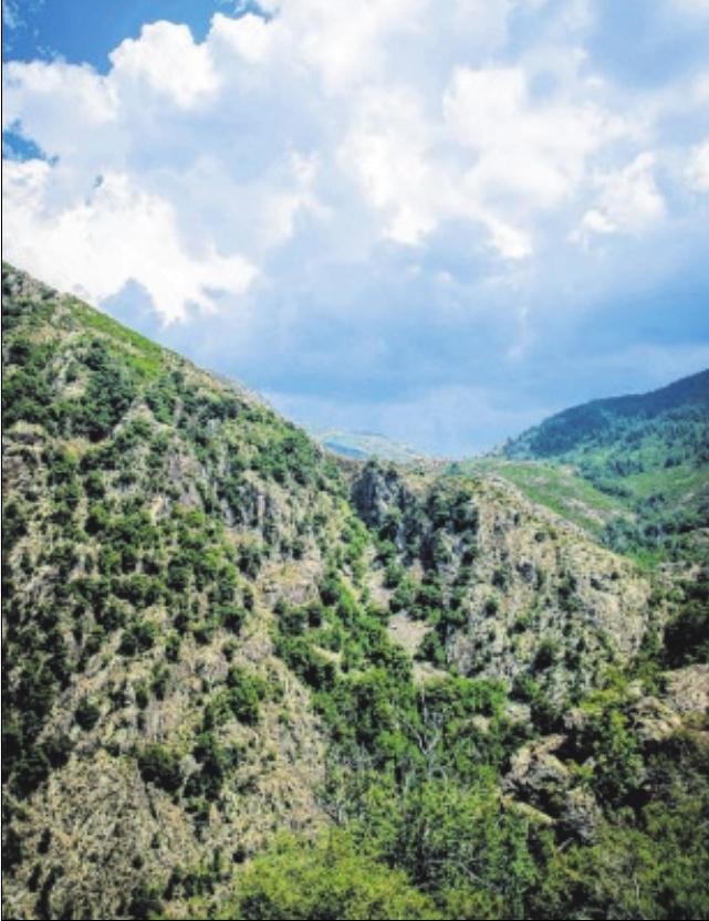 Sept jours en Corse,ROGER ANTECH
