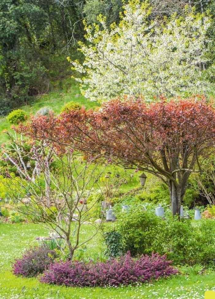 Un jardin beau toute l\'année | SFR Presse