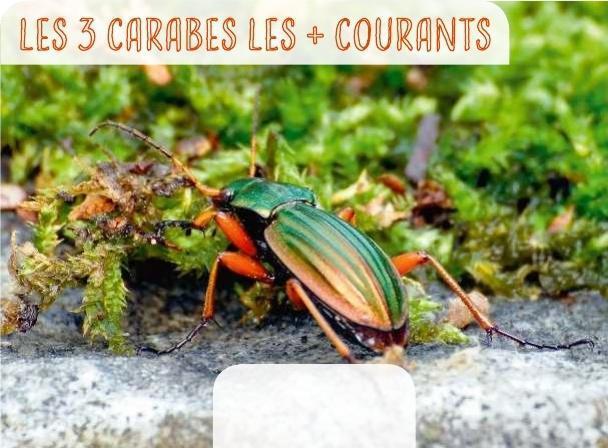 Texte : Catherine Levesque