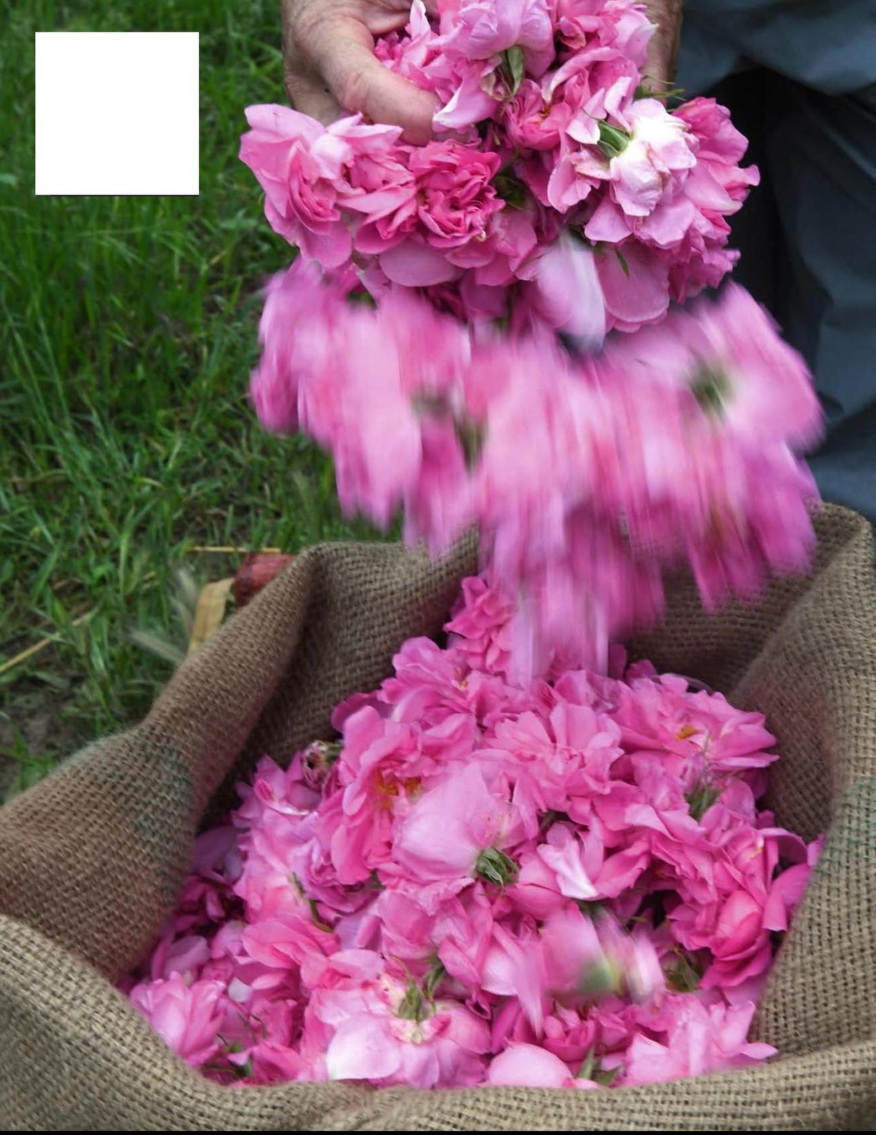 Par Aurélia Hermange Photos Virginie Clavières
